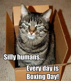 Silly humans... Every day is Boxing Day!