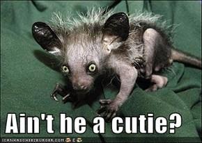 Ain't he a cutie?