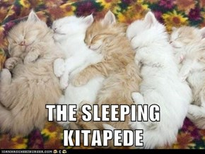 THE SLEEPING KITAPEDE