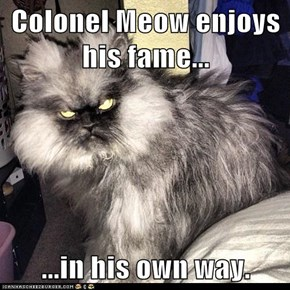Colonel Meow enjoys his fame...  ...in his own way.
