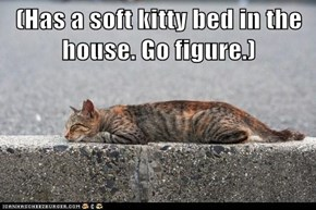 (Has a soft kitty bed in the house. Go figure.)