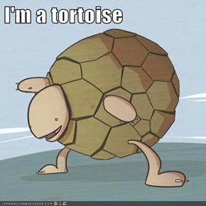 I'm a tortoise