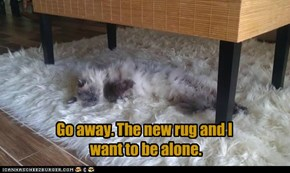 Go away. The new rug and I  want to be alone.