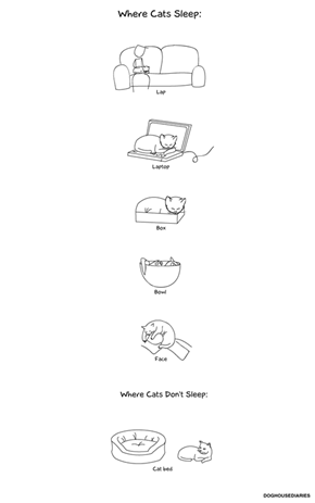 Where Cats Sleep