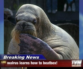 Breaking News - walrus learns how to beatbox!