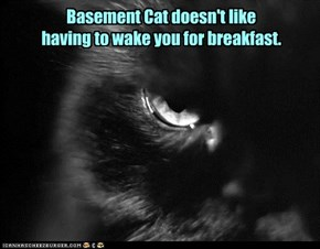 Basement Cat doesn't like  having to wake you for breakfast.
