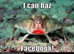I can haz   Facebook!