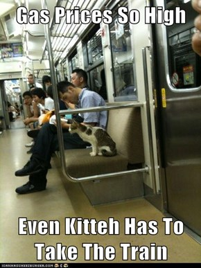 Gas Prices So High   Even Kitteh Has To Take The Train