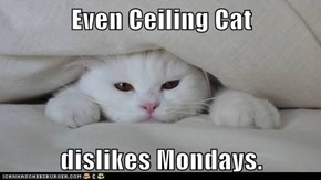 Even Ceiling Cat  dislikes Mondays.