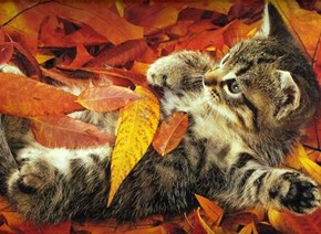 Cyoot Kitteh of teh Day: Autumn is Finally Here!