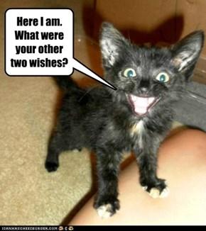 Wish 1:  I can has da perfect kitten.