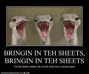 BRINGIN IN TEH SHEETS, BRINGIN IN TEH SHEETS