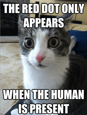 Sudden Clarity Cat: You've Been Toying With Me for Years!
