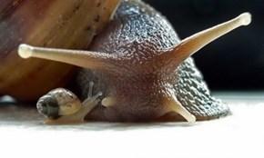 Snail Friends