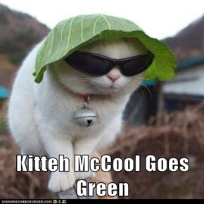 Kitteh McCool Goes Green