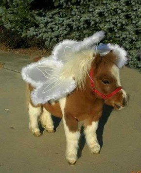 Miniature Angel Horsey