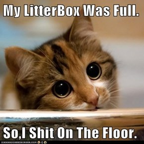 My LitterBox Was Full.  So,I Shit On The Floor.
