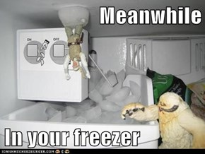 Meanwhile  In your freezer
