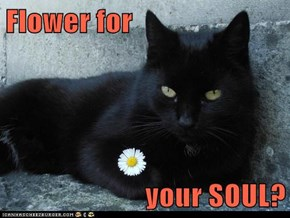 Flower for  your SOUL?
