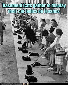 Basement Cats gather to display their cat ladies on leashes.
