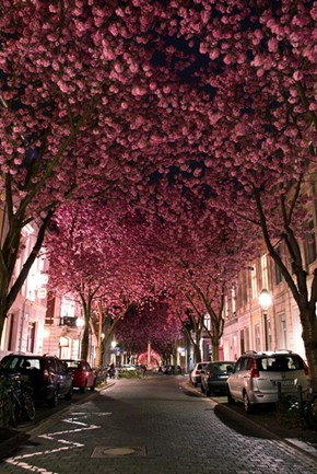 Blooming in Bonn, Germany