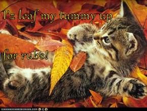 I'z leaf my tummy up for rubs!