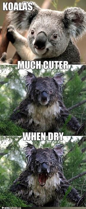 Koalas Are ....