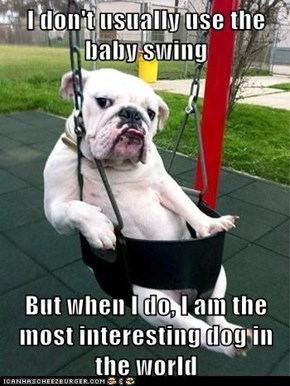 I don't usually use the baby swing  But when I do, I am the most interesting dog in the world