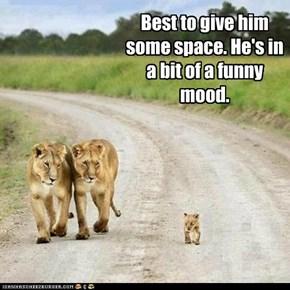 Best to give him some space. He's in a bit of a funny mood.