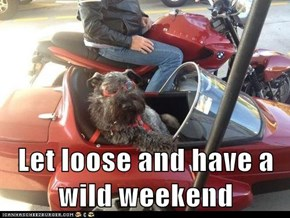 Let loose and have a wild weekend