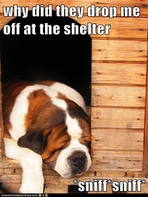 why did they drop me off at the shelter  *sniff*sniff*