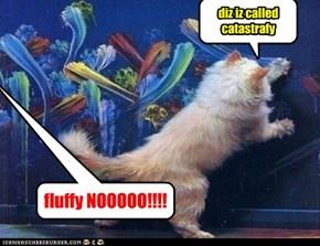 fluffy NOOOOO!!!!
