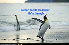 Herbert, talk to the flipper.   We're through