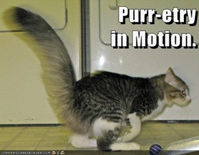 Purr-etry                          in Motion.