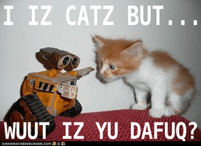 I iz Catz but wuut is yu DAFUQ?