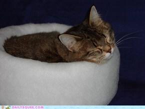 America's Next Cat Model!