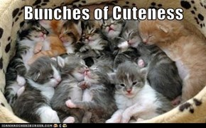 Bunches of Cuteness