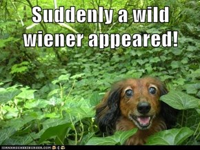 Suddenly a wild wiener appeared!