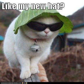 Like my new hat?