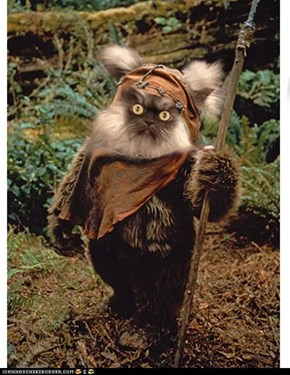 The truth has come out about Colonel Meow, he isn't really a cat, he is an Ewok!