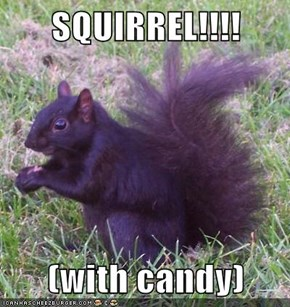 SQUIRREL!!!!  (with candy)