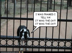 I WAS FRAMED I TELL YA! IT WAS THE CAT! IT WAS THE CAT!