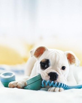 Cyoot Puppy ob teh Day: Telephone