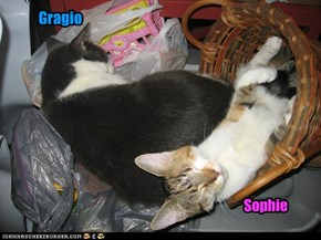 Two of Gragio09's Cat Crew