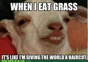 High as a Goat