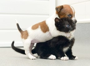 Goggies R Owr Friends: Rejected Puppy and Abandoned Kitteh Become Best Friends Forever