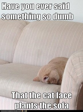 Have you ever said something so dumb  That the cat face plants the sofa