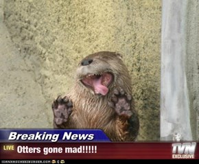 Breaking News - Otters gone mad!!!!!