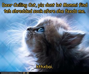 A kitteh's prayer