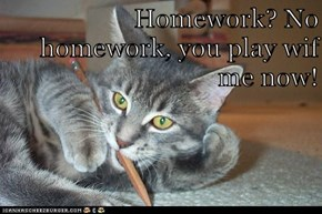 Homework? No homework, you play wif me now!
